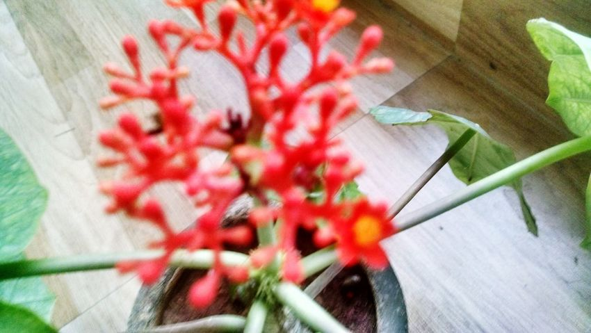 Growth Plant Flower Red No People Day Nature Outdoors Fragility Beauty In Nature Leaf Freshness Close-up Flower Head