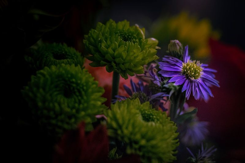Plant Flower Flowering Plant Growth Beauty In Nature Freshness No People Close-up Nature Fragility Vulnerability  Flower Head Purple Green Color Inflorescence Multi Colored Outdoors Night Petal Focus On Foreground