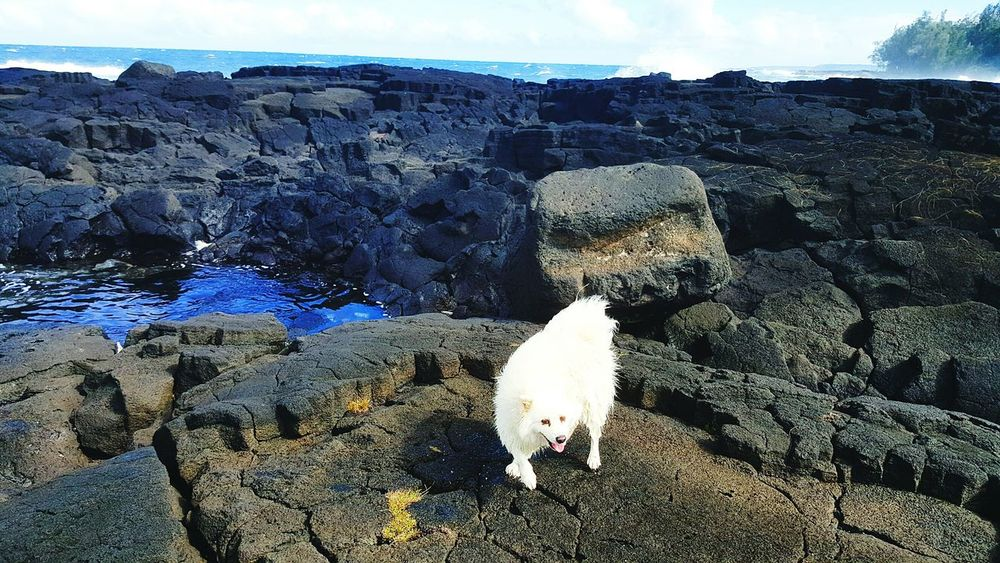 Dog on Puna Lava Field Windy Day Lava Rock Sky Ocean Waves Tidepools Bigislandhawaii Hawaii Aloha Namaste ❤