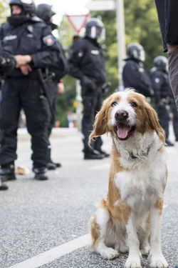 G20 Demonstration 2017 Fear Force G20 Gipfel G20 Summit Hamburg Hund NOG20 Polizei Uniform Animal Axvo Demonstration Demonstrations  Demonstrators Dog Helmet Helmets Outdoors People Pets Police Police Force Smile Weapon Weapons Stories From The City