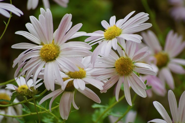 Beauty In Nature Blooming Close-up Day Flower Flower Head Fragility Freshness Growth Nature No People Outdoors Petal Plant