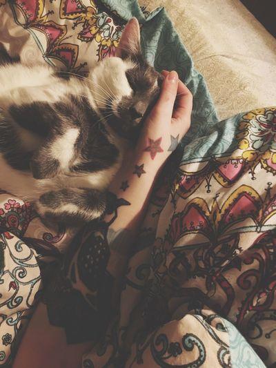 Cat nap Indoors