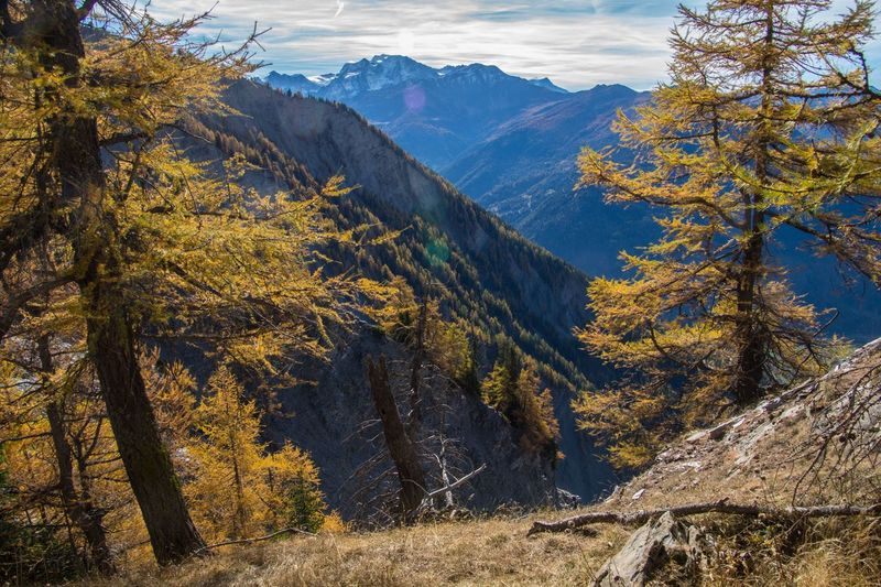 col of lien,valais,swiss Tree Mountain Autumn Beauty In Nature Plant Scenics - Nature Mountain Range Tranquil Scene Environment Change Landscape Tranquility Nature No People Non-urban Scene Day Land Sky Forest Outdoors Coniferous Tree Pine Tree Autumn Collection Mountain Peak Pine Woodland