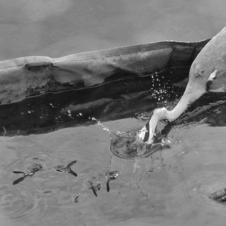 Airone Airone Cenerino Pesci Fish Hunter Italia Italy❤️ Lago Di Como Lake Lombardia Caccia