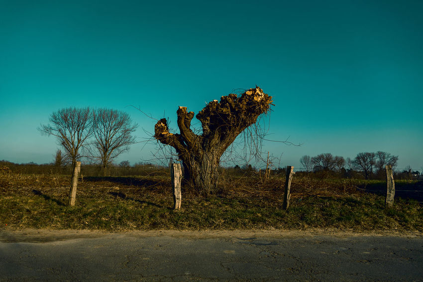#kaiserswerthmeadows03 Bare Tree Beauty In Nature Blue Clear Sky Day Dead Plant Environment Field Land Landscape Nature No People Non-urban Scene Outdoors Plant Scenics - Nature Sky Tranquil Scene Tranquility Tree Trunk