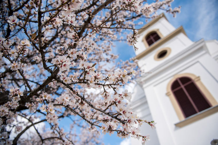 Flowering Plant Plant Flower Freshness Fragility Tree Blossom Cherry Blossom Growth Branch Nature Springtime Cherry Tree No People Outdoors Almond Tree Almond Blossom Blooming Building Exterior Low Angle View Built Structure Architecture Building Sky Religion Spirituality Havihegy Pécs