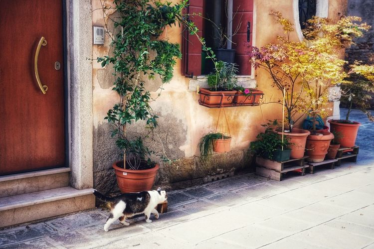 View of a cat with potted plants