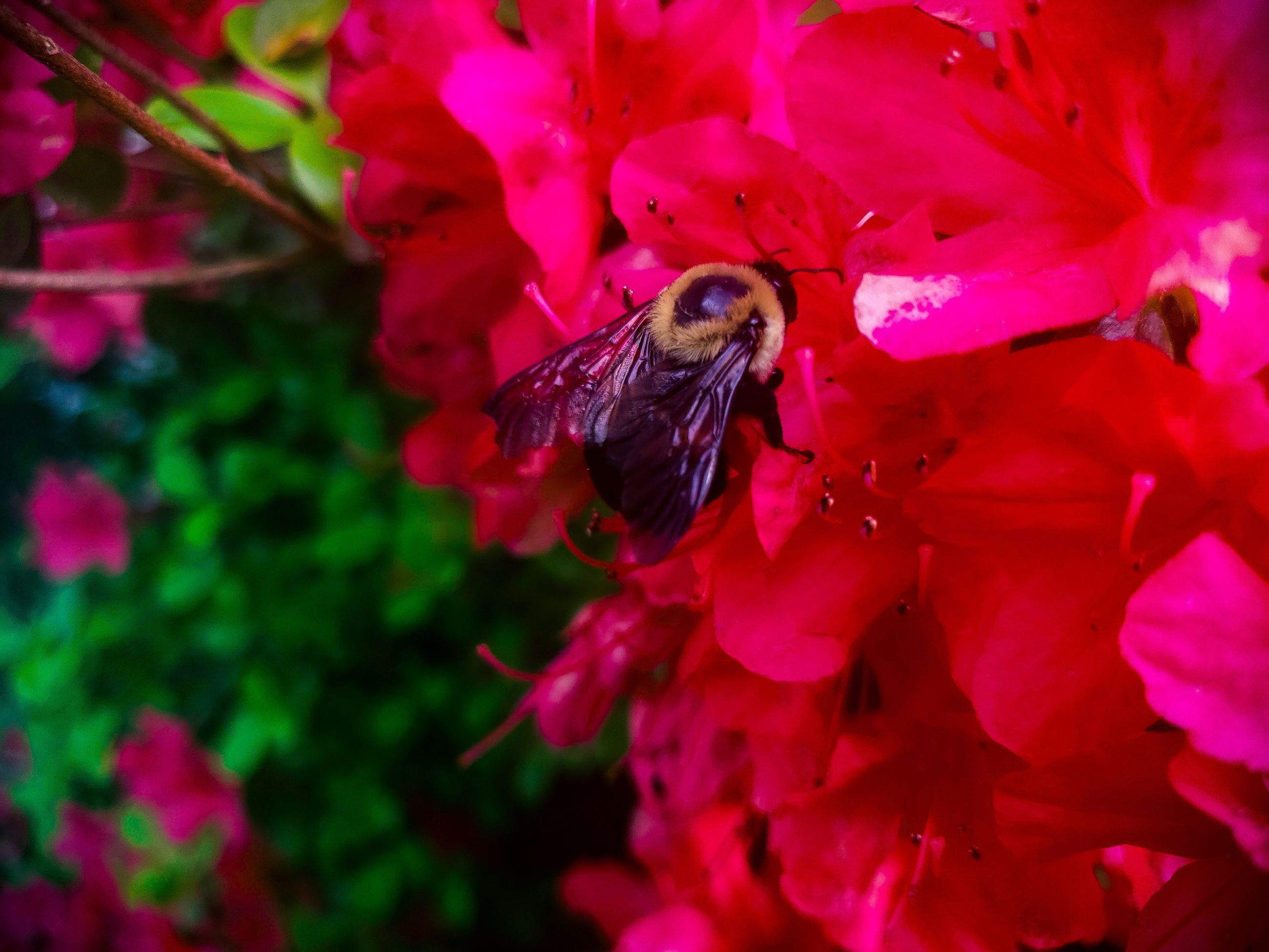 invertebrate, one animal, flower, animal wildlife, animal themes, animal, animals in the wild, insect, flowering plant, plant, petal, beauty in nature, growth, fragility, flower head, vulnerability, freshness, pollination, close-up, pink color, no people, animal wing