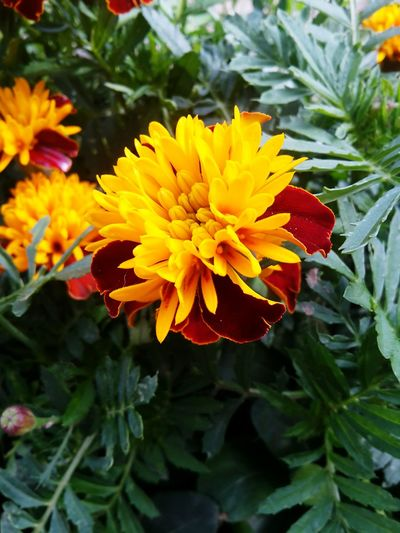 Flower Plant Nature Flower Head Growth Beauty In Nature Petal Freshness Fragility Close-up Leaf Day Outdoors No People Yellow