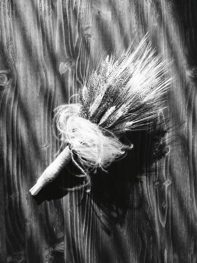 Close-up Studio Shot No People Peacock Feather Peacock Fragility Indoors  Flower Day Freshness Blackandwhite