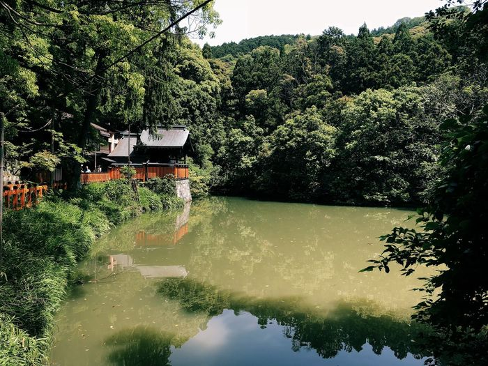 Beauty In Nature Built Structure Day Green Color Growth Lake Lush Foliage Nature No People Outdoors Plant Reflection Scenics - Nature Tranquility Transportation Tree Water Waterfront