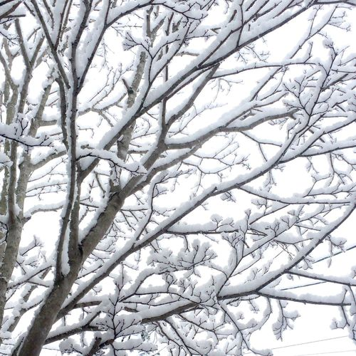 March Snow EyeEm IPhone Hokkaido Japan