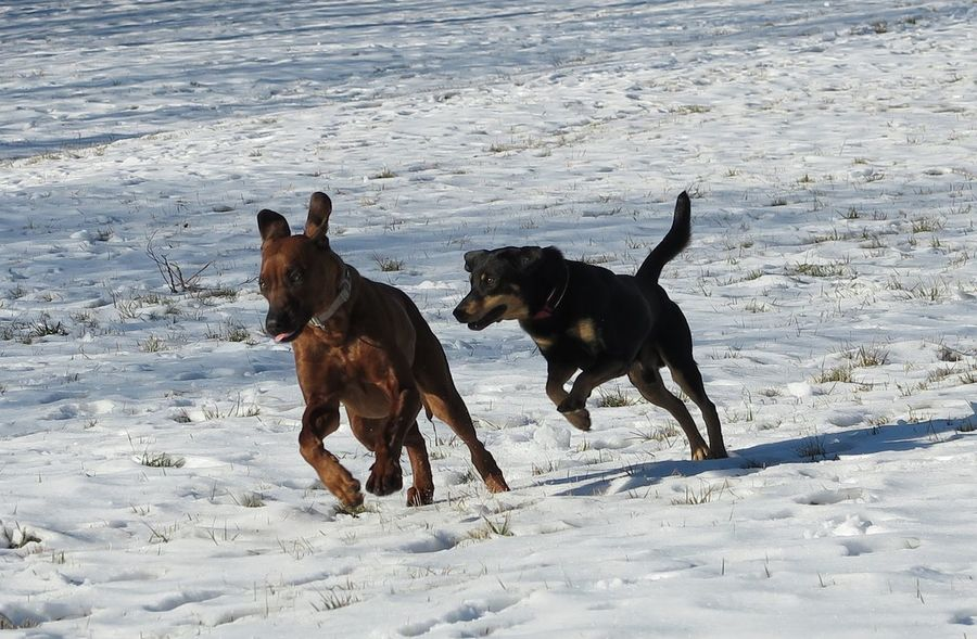 Flying dogs 😊 Motion Photography Motion Capture Dogs Wintertime Snow ❄ Winter Togetherness No People Friendship Outdoors Animal Themes Nature Pets Domestic Animals Running Cold Temperature Snow Motion Dog Day Mammal