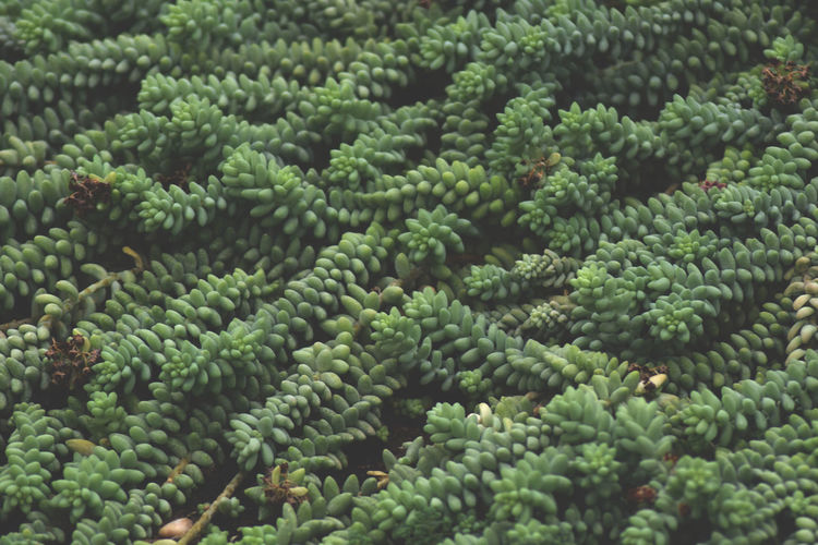 Abundance Backgrounds Beauty In Nature Botany Close-up Day Food Full Frame Green Green Color Growth Indoors  Natural Pattern Nature No People Pattern Plant Repetition Succulent Plant