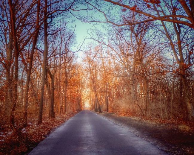The Way Forward Tree Road Nature Beauty In Nature Day No People Outdoors Tranquility Sky Scenics Travel Destinations Tourism Clear Sky Tranquil Scene Vacations