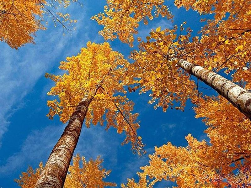 Hunza I am coming this year to see your colors... 28th Oct - 8th Nov. Interested people willing to join kindly inbox for this Nature Tour. Naturelandscapes Nature Hunza Autumn Gilgitbaltistan Nagar @our_beautiful_country_pakistan @nature_414 @beautifulyoupak @nature_pakistan @picsofpakistan @travelbeautifulpakistan @instameetpakistan @vsco.pk