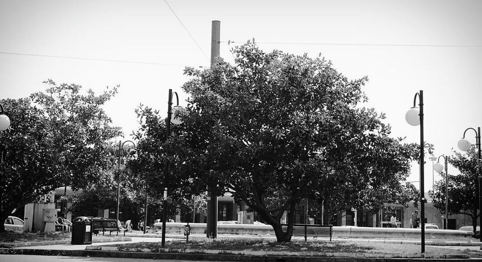 Tree No People City Power Line  Nature Sky Outdoors Neverstopexploring  Walking Bnw_collection Mywork Wall Textures Exploring Blackandwhite Blackandwhite Photography BW_photography Amateurphotography Bw_collection Canoneos1100D Bnwphotography Canon_offical Passionforphotography Canon1100d Tree Tree Trunk