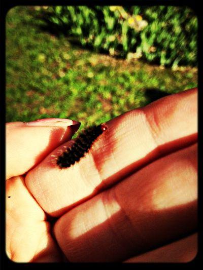 Caterpillar Animals Taking Photos Autumn
