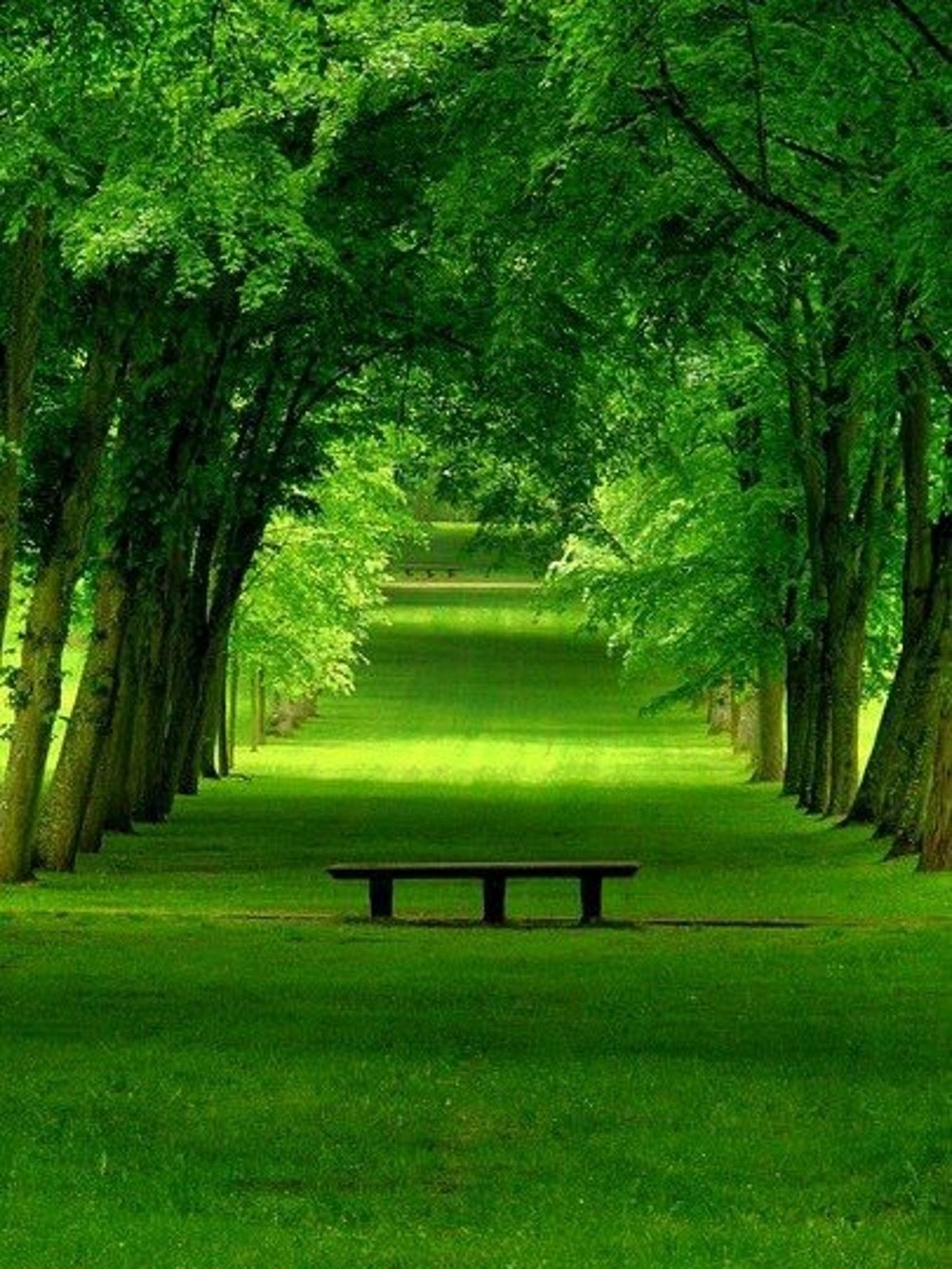 tree, green color, grass, tranquility, tranquil scene, growth, tree trunk, nature, park - man made space, beauty in nature, the way forward, scenics, lush foliage, branch, shadow, park, landscape, footpath, lawn, sunlight