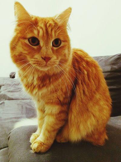 Beautiful Cat Baby Love Tortenpost