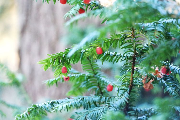 Autumn Green Red Berry Red Nature Beauty In Nature Beautiful Myhobby NX300 Hobby Photography Hungary Tree Branch Leaf Close-up Plant Green Color