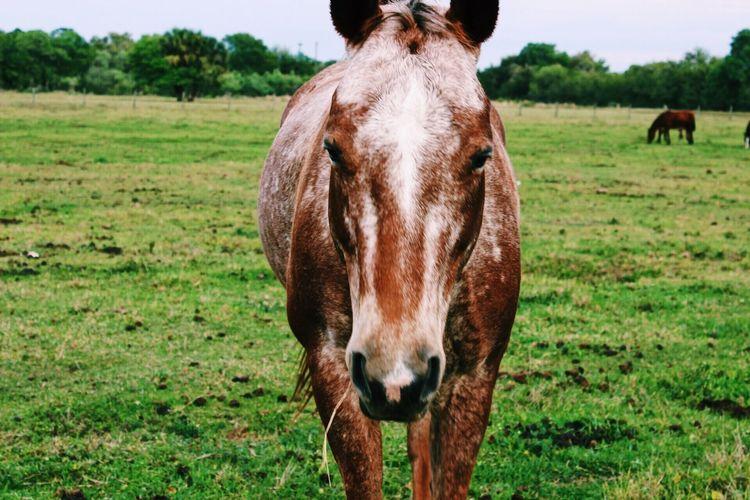 Horse Grass Farm