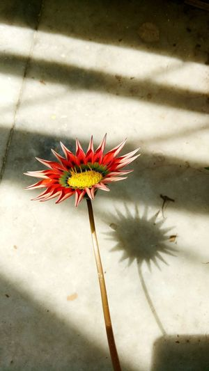 Gerberaflower Fragility Flower flower#garden#nature#ecuador#santodomingoecuador#eyeEmfollowers#iphoneonly#nofiltrer#macro_garden#pretty#beautifulfollowmesho flower#garden#nature#ecuador#santodomingoecuador#eyeEmfollowers#iphoneonly#nofiltrer#macro_garden#pretty#beautifulfollowmesho Flowerslovers Shadows_collection