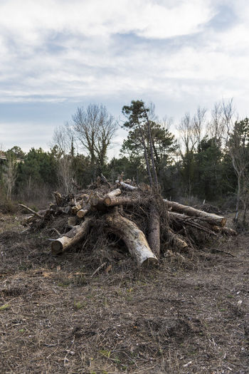 Timber Harvesting Lumber Industry, fire wood pile in the forest Cloud - Sky Day Dead Plant Deforestation Driftwood Fallen Tree Field Forest Land Log Nature No People Non-urban Scene Outdoors Plant Sky Timber Tranquil Scene Tranquility Tree Wood Wood - Material
