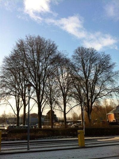 Morning Light Treetastic