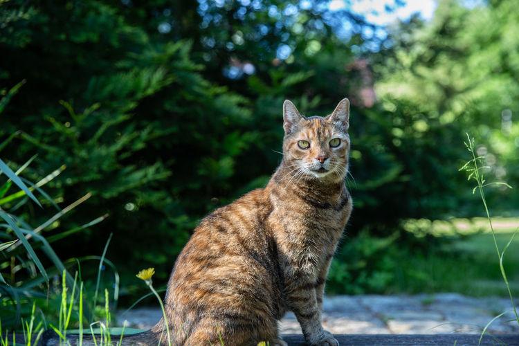 Portrait of cat sitting against trees