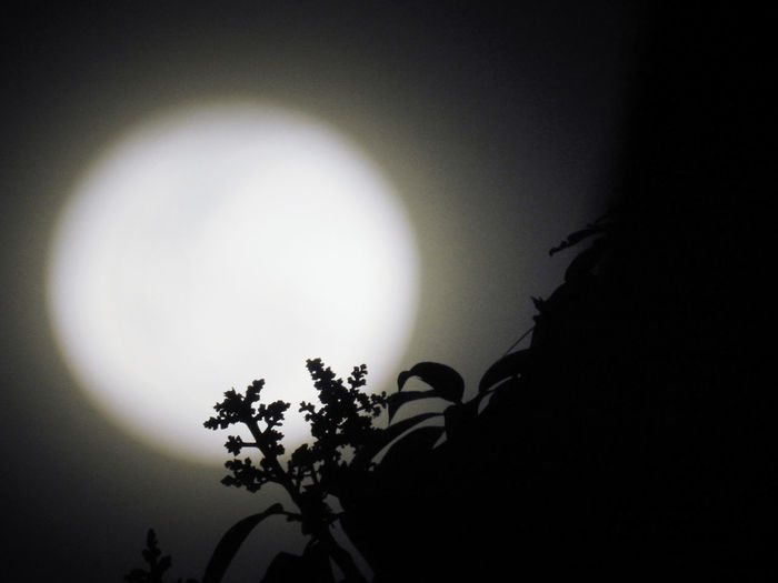 Flowers silhouetted against the full moon Plant Tree Sky Silhouette Nature Moon No People Night Growth Beauty In Nature Full Moon Outdoors Tranquility Circle Scenics - Nature Moonlight Dark