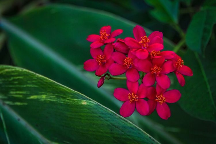 Showcase April The Week On Eyem Flowers Jamaica Garden Caribbean Sandals Sandalsresorts Sandalsroyalcaribbean