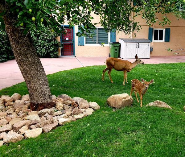Deer Fawn Colorado Nature Hiking Bird Pets Tree Dog Grass Architecture