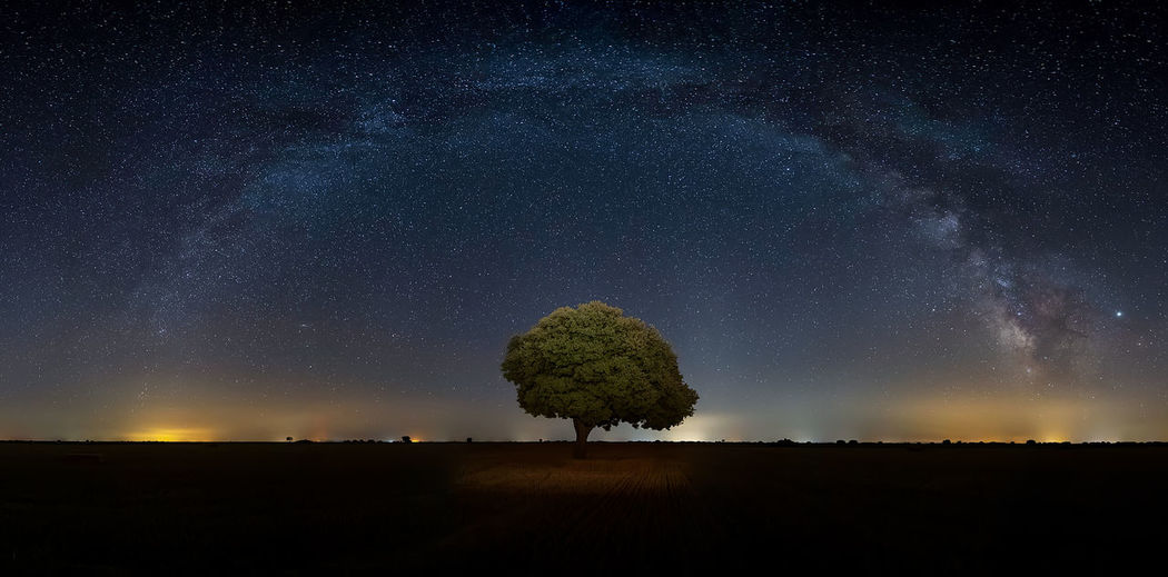 Scenic view of tree on land against star field at night