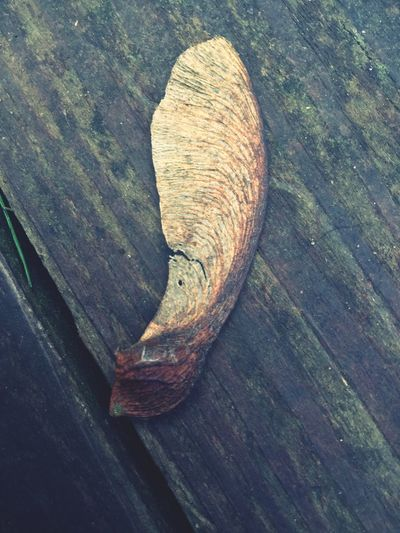 High Angle View Close-up Wood - Material No People Nature Outdoors Day Tree Ring