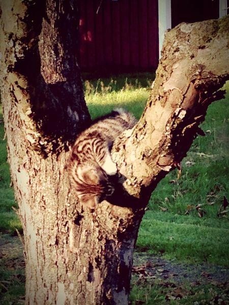 Cute Cat 😻