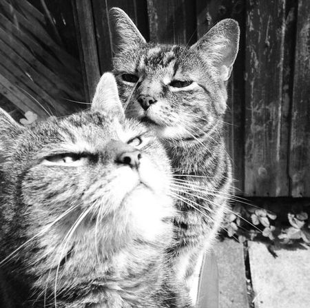My 16 year old cats! Things I Like Cats Catsofinstagram Check This Out Taking Photos Animals Blackandwhite EyeEm Furry Friends Furry
