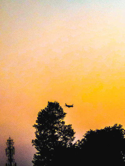 AT THE SUNSET Landing Aeroplane Tree Sunset Silhouette Flying Sky Orange Color Scenics Sky Only Tranquil Scene Tranquility Non-urban Scene Countryside Calm Dramatic Sky Capture Tomorrow