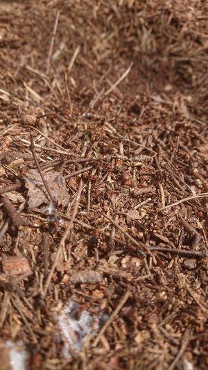 Waking up ants