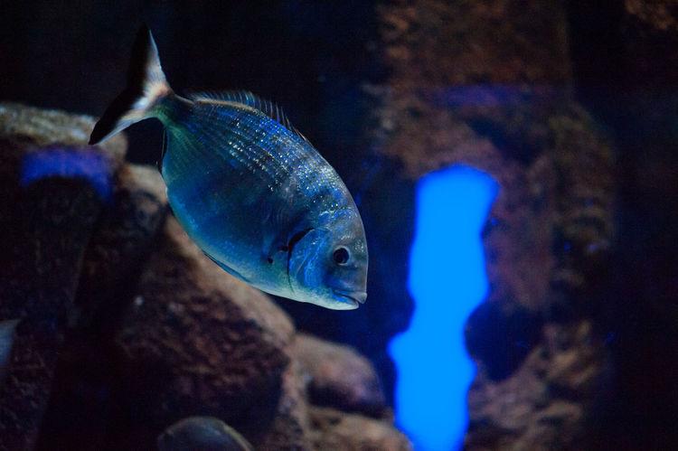 #beautiful #amazing #blue #coral #aquarium #fish #ocean #beautiful #amazing #blue #aquarium Macro Photography #aquariumfish #bigfish #Blue #coral #coralreef #coralreefs #exotic Fish #fish #aquarium #fishtank #TagsForLikes #fishporn #instafish #instagood #swim #swimming #water #coral #ree #aquarium Macro Photography #aquariumfish #Blue #coralreef #coralreefs #exotic Fish #fish #fish #aquarium #fishtank #TagsForLikes #fishporn #instafish #instagood #swim #swimming #water #coral #reef #reeftank #tropical #tropicalfish #aquaria #photooftheday #saltwater #freshwater #beautiful #ocean #watertankx #fish Eye #fish Macro Photograpy #fishtank #mediterraneanfish #Moray #Moray Eel #Nature  #ocean #OceanDrive #shark #UNDERWATER #underwater Photography Aquarium