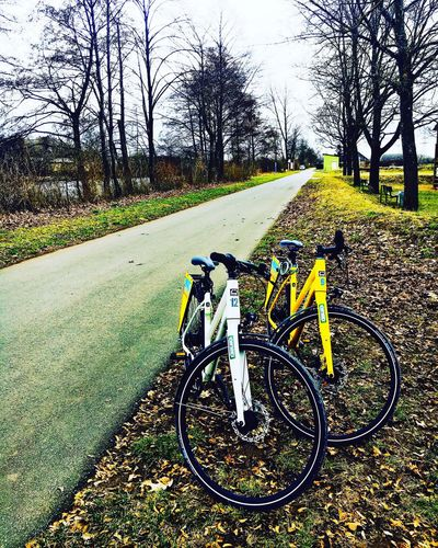 Bicycle Cycling Germany🇩🇪 Bamberg  Nature Tree Outdoors Lifestyles Day Sunday Beauty In Nature The Great Outdoors - 2017 EyeEm Awards