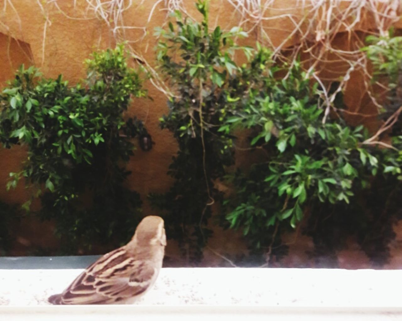 one animal, plant, animal themes, animals in the wild, growth, bird, nature, day, leaf, no people, animal wildlife, outdoors, tree, close-up