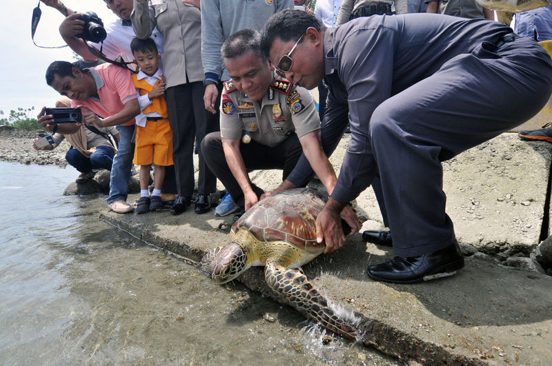 Indonesian release Sea Turtle_ Adult Animal Wildlife Animals In The Wild Catch Of Fish Crouching Day Fish Group Of People Marine Men Occupation One Animal Outdoors People Real People Reptile Sea Vertebrate Water