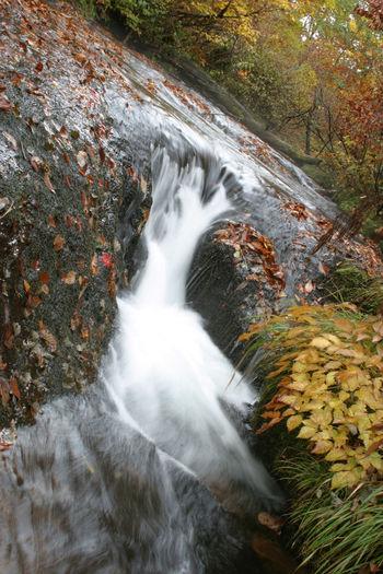 雑魚川の流れ Forest Motion Nature Water Beauty In Nature Scenics - Nature Waterfall Outdoors Power In Nature Autumn No People Nagano Nagano, Japan Nagano Prefecture,Japan Water_collection Nature Photography Nature_collection