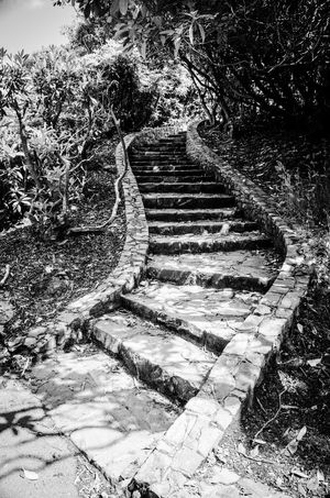 Stairs Monochrome Photography Malephotographerofthemonth Northern Ireland Tollymore Forest Park Black And White Photography Tranquility Monochrome Blackandwhite Tranquil Scene EyeEm Gallery From My Point Of View EyeEmBestPics EyeEm Best Shots Eye4photography  Weathered Old Eyemphotography No People Outdoors EyeEm Tree Textured  Steps Steps And Staircases