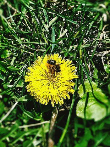 Springtime Little Bee Flower Smile