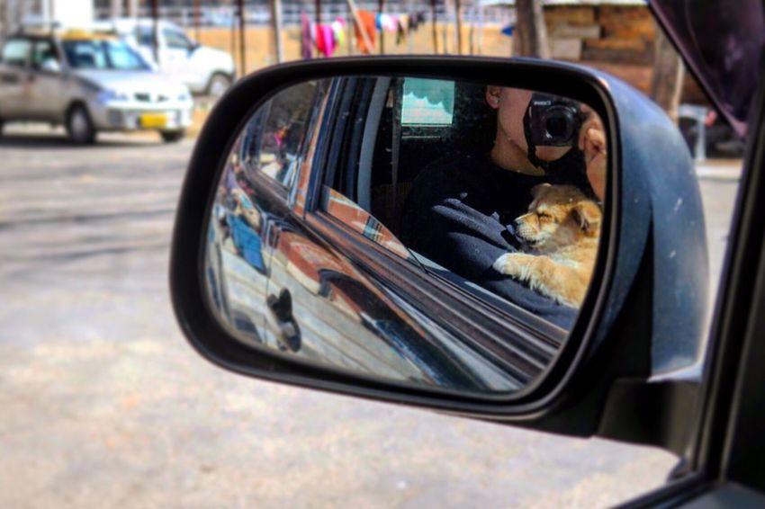 🐶💕💞💕 Hello World Pets Puppy Puppy Love Dogs Igdogs Bhutan Taking Photos Enjoying Life Photography EyeEmBestPics EyeEm Gallery Eyeem Photography Eye Em Around The World HelloEyeEm Eyeemoftheday Cute Cute Pets EyeEm Pets