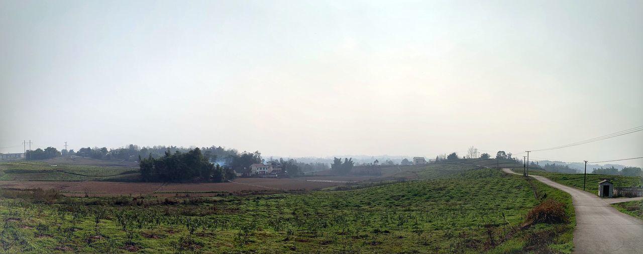 Fog Sky