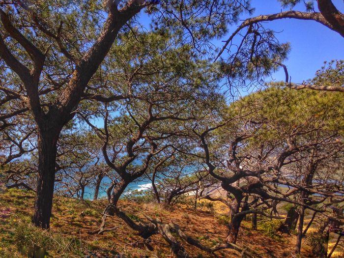 IPSScenery Hiking Nature Trees Beach Torrey Pines IPS2015Trees