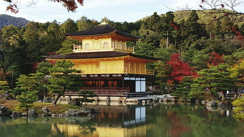 Autumn in Kyoto At 鹿苑寺(金閣寺) Kinkaku-ji Temple Kyoto Japan Japan Photography Travel Photography Autumn🍁🍁🍁 Autumn Colors Fall Beauty Fall Fall Colors Gold